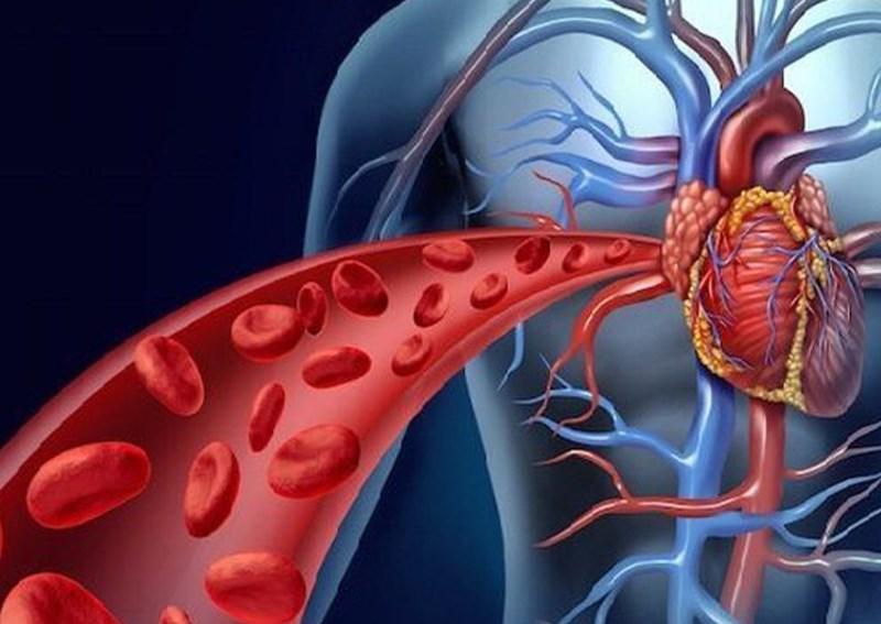 Cải thiện lưu lượng máu và giảm huyết áp