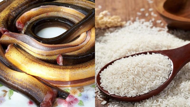 Nguyên liệu món ăn 2 cách nấu cháo lươn