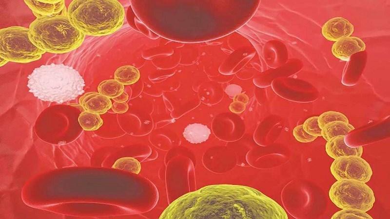 Vitamin A tăng cường hệ thống miễn dịch