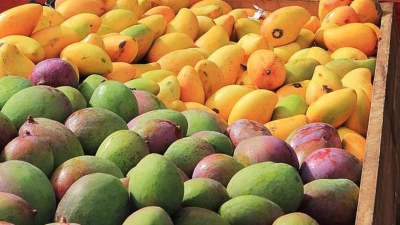 Có hơn 500 giống xoài với nhiều màu sắc và hương vị khác nhau