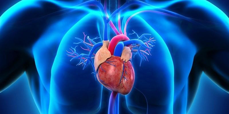 Chôm chôm giảm nguy cơ mắc bệnh tim mạch
