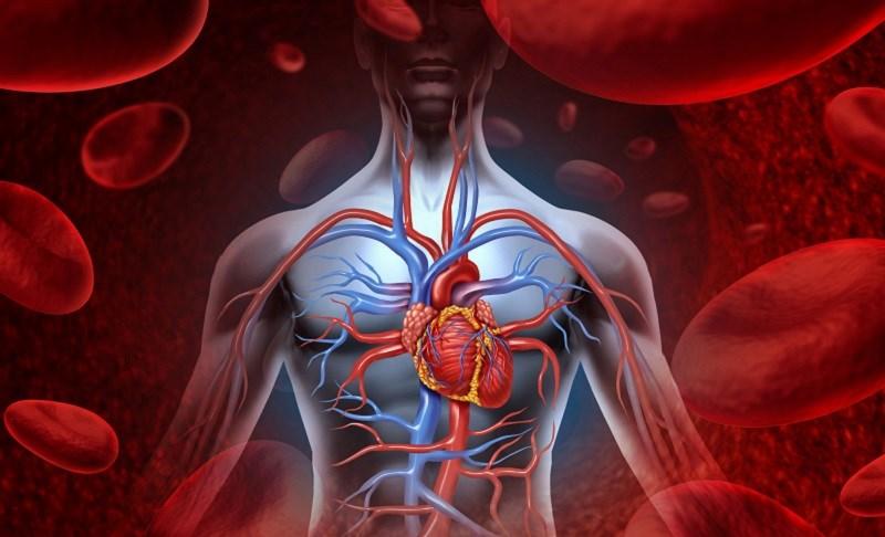 Uống nước nóng để cải thiện lưu thông máu
