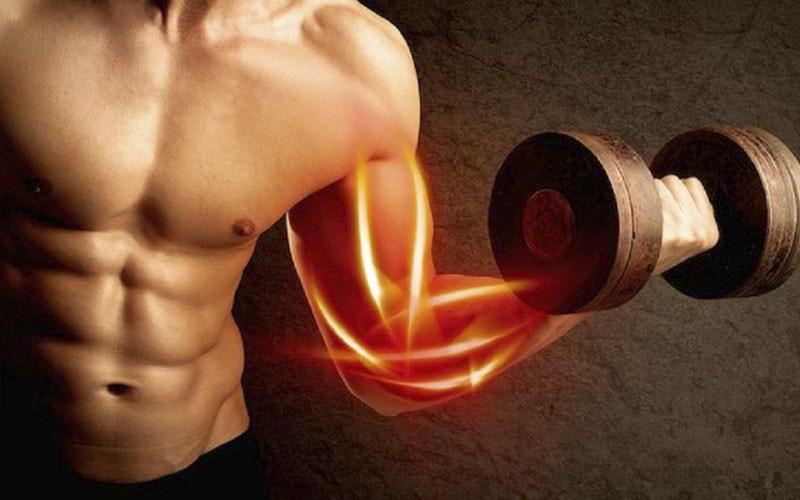 Cung cấp protein cho cơ thể