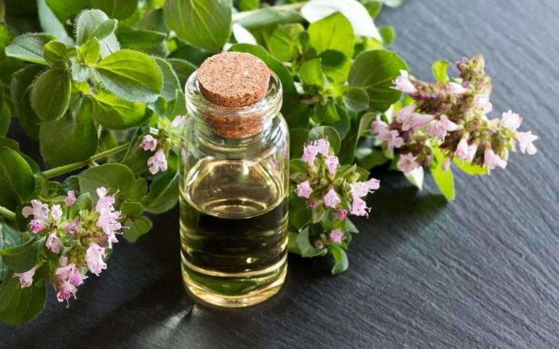 Tinh dầu Oregano có lợi cho việc điều trị