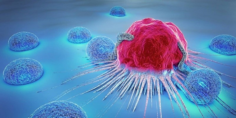 Đậu bắp làm giảm nguy cơ mắc bệnh ung thư