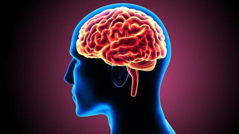 Anh đào thúc đẩy sự phát triển của não
