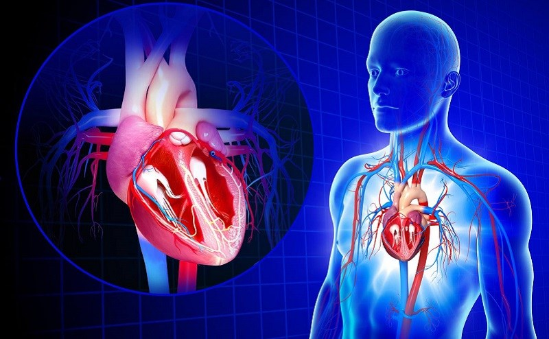 Thức ăn nhanh làm tăng nguy cơ mắc bệnh tim