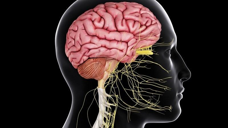Thức ăn nhanh ảnh hưởng đến hệ hô hấp