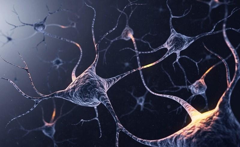 Vitamin B12 hỗ trợ và tăng cường sức khỏe trí não