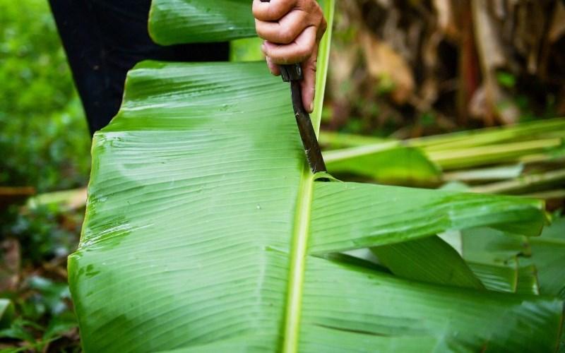 Sử dụng lá chuối xanh giúp làm giảм ngứa khi gọt khoai
