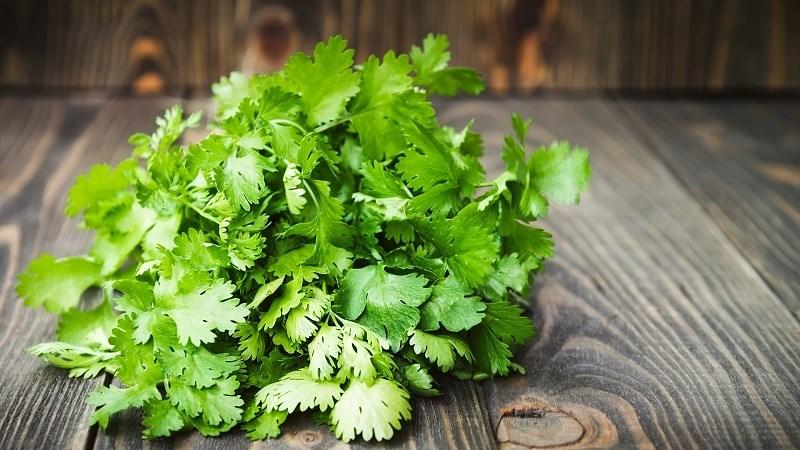 Đặc điểm rau mùi ta (cilantro)