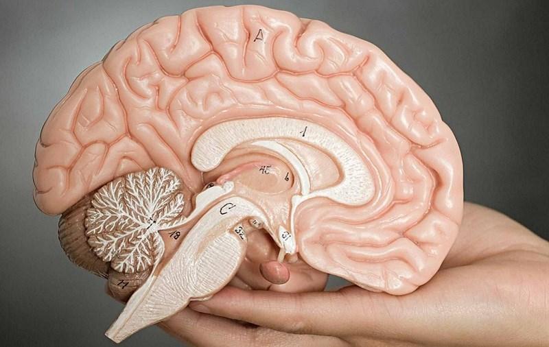 Măng cụt cải thiện hệ thần kinh