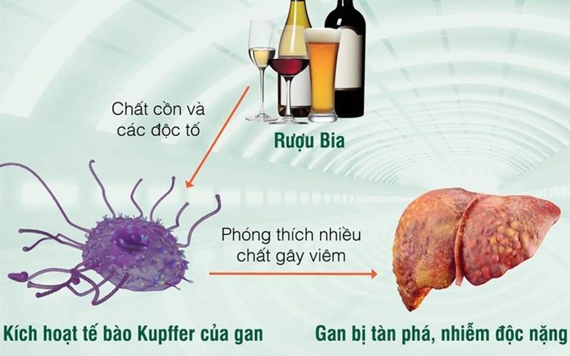 Chuyển hóa rượu ở gan