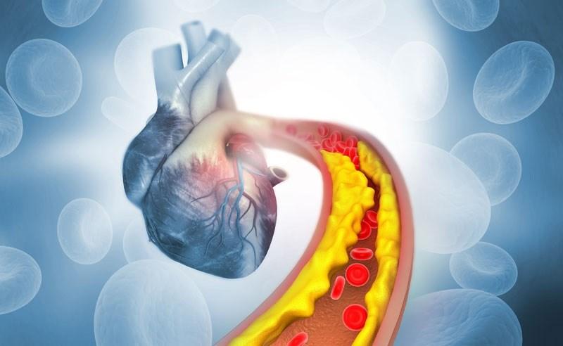 Quả gấc ngăn ngừa các bệnh về tim mạch