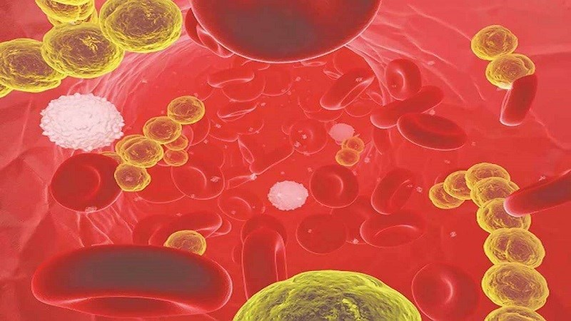 Dầu mè giúp kiểm soát lượng đường trong máu