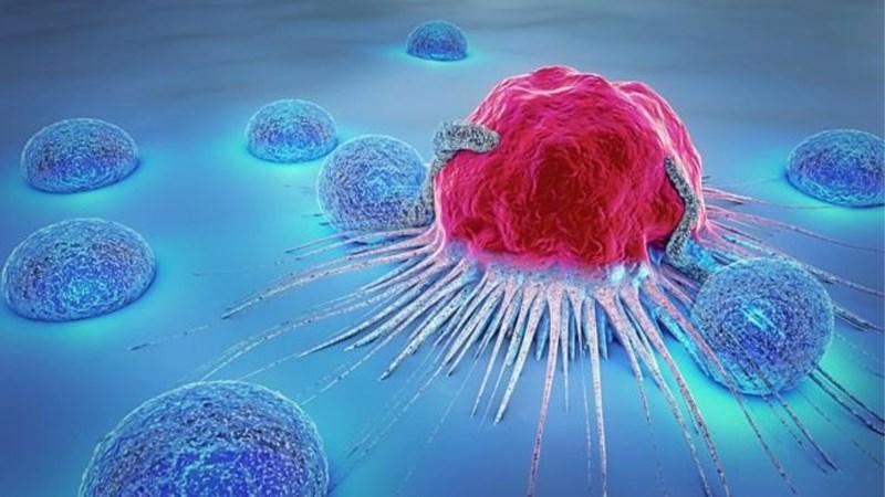 Ngăn ngừa ung thư ngô