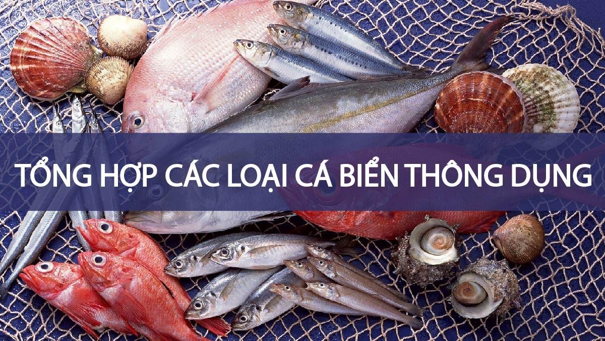 Tổng hợp các loại cá biển thông dụng