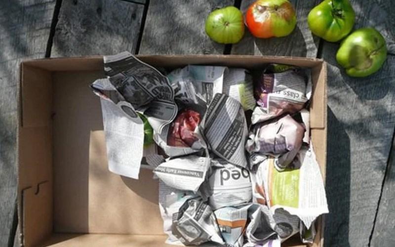 Dùng giấy báo che phủ trái cây