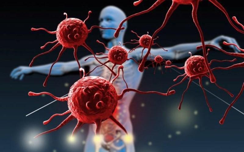 Đậu gà rất tốt cho hệ thống miễn dịch