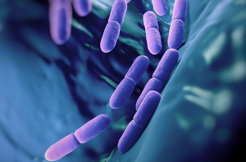 Nguồn cung cấp lợi khuẩn dồi dào