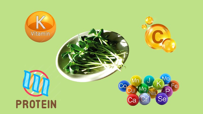 Rau mầm nhiều chất dinh dưỡng