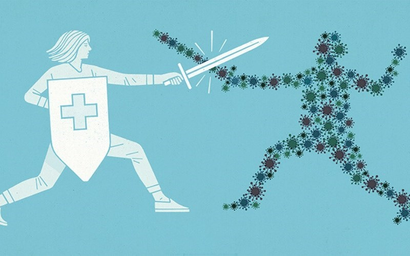 Nấm linh chi thúc đẩy hệ miễn dịch