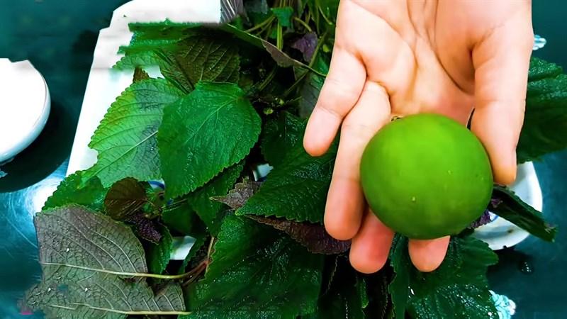 Nguyên liệu món ăn nước lá tía tô