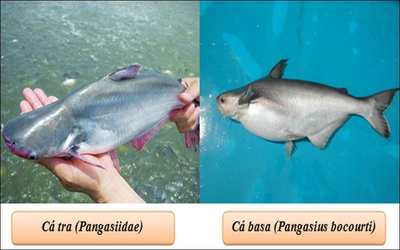 Theo hình dạng của đầu cá