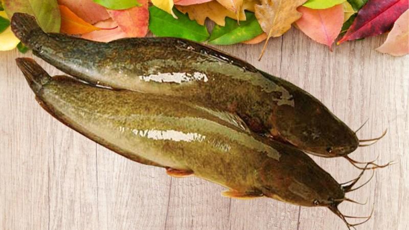Tổng hợp tên các loại cá thịt trắng ngon, tốt cho sức khoẻ bạn cần biết