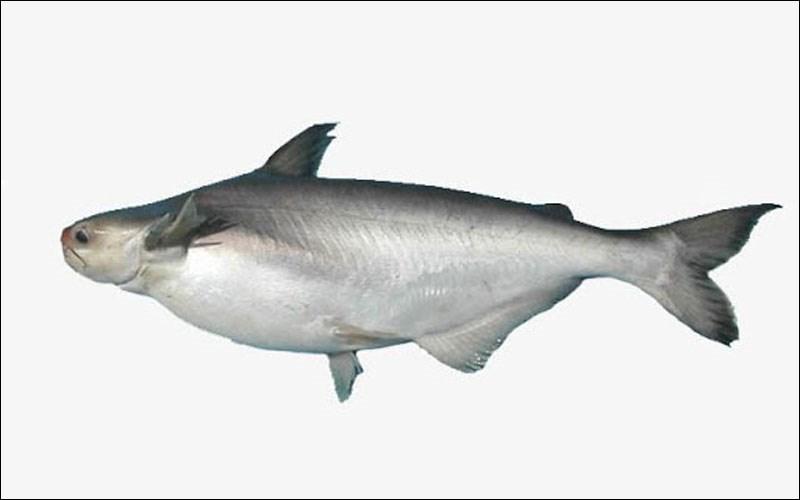 Có bao nhiêu con cá trong 1 kg?