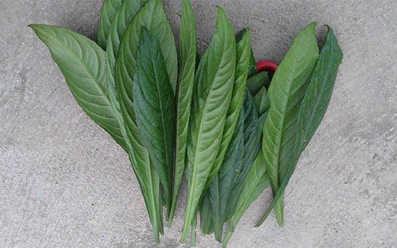 Rau thơm - rau gia vị là gì? Tên các loại rau thơm gia vị ở Việt Nam
