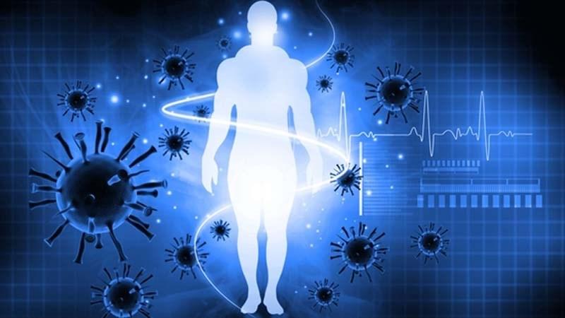 Quất giúp tăng cường miễn dịch
