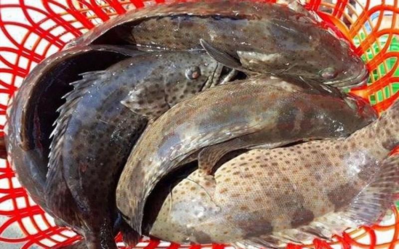 Lưu ý khi sơ chế cá mú