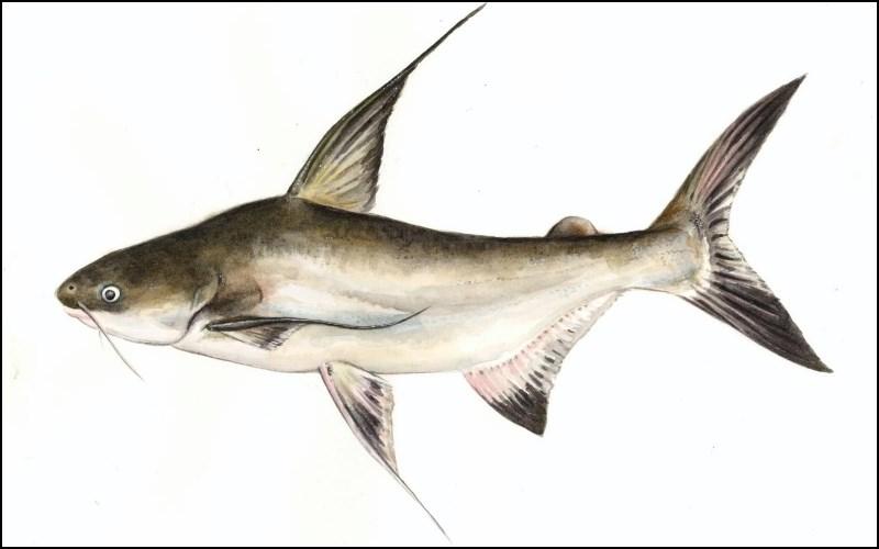 Cá đột kích