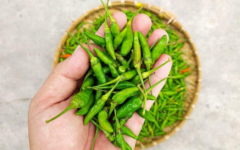 Tên các loại ớt ở Việt Nam, nhiều loại độc đáo có thể bạn chưa biết