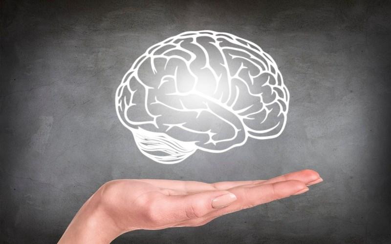 Hoa đậu biếc tốt cho não bộ