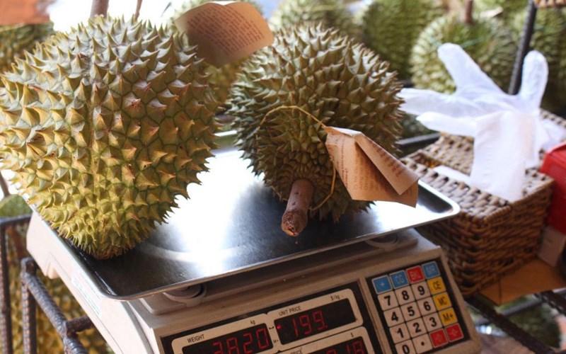 Khi chín quả sầu riêng sẽ nhẹ hơn rất nhiều so với khi còn sống