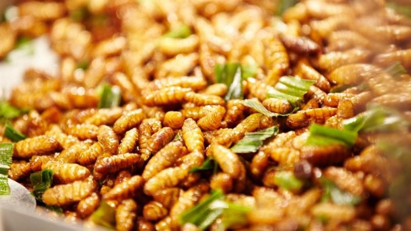 Gỏi nhộng ong rừng U Minh