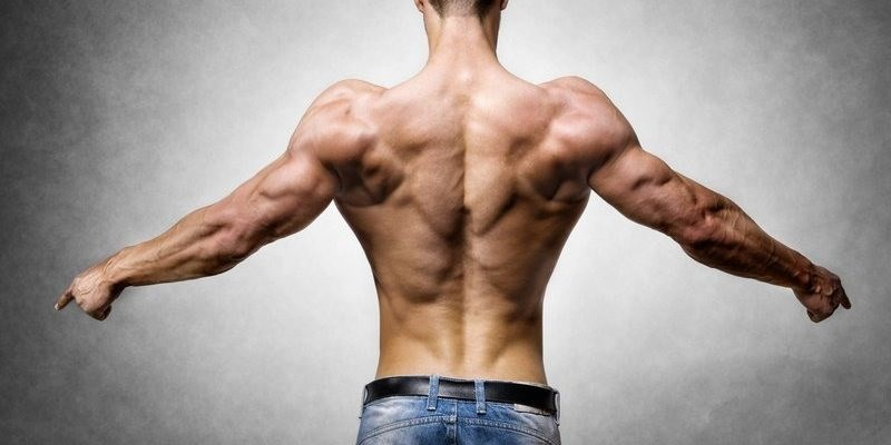 Giúp tăng cơ