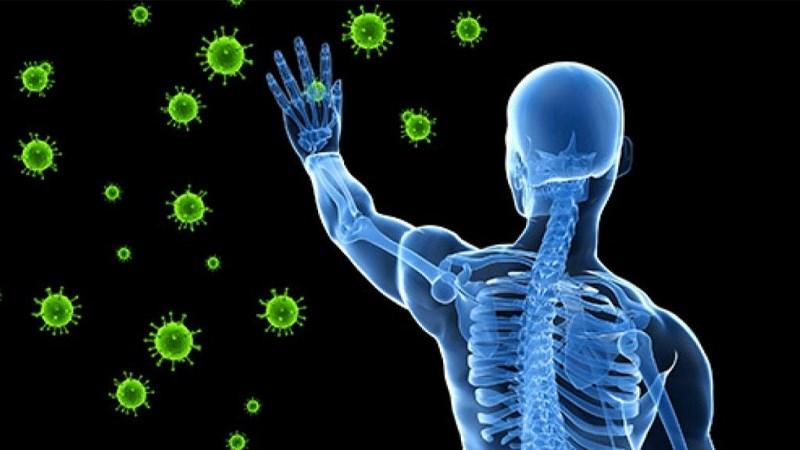Lá bồ công anh cải thiện hệ miễn dịch