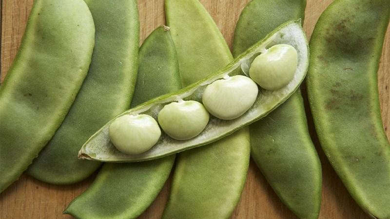Đậu lima (lima beans)