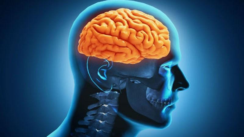 Sâm tố nữ tốt cho não bộ