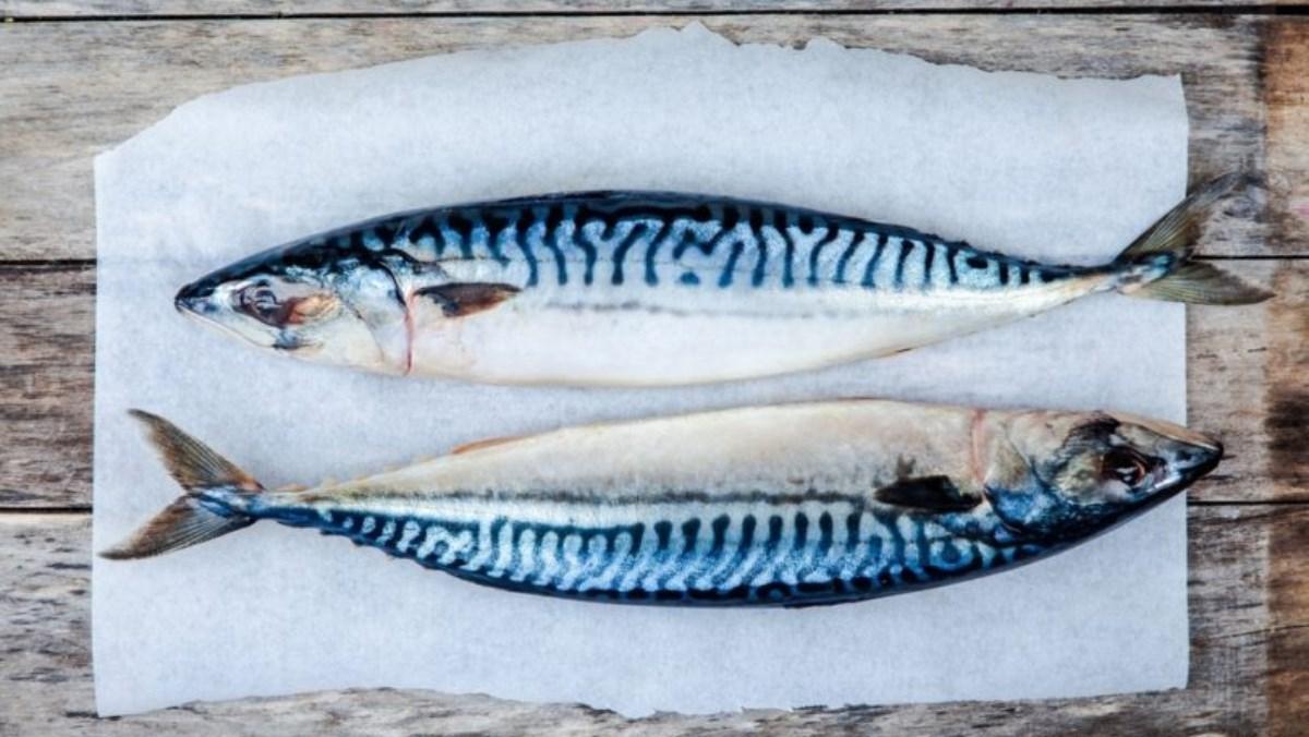 Cá thu là cá gì, Có mấy loại, Cách chọn cá thu