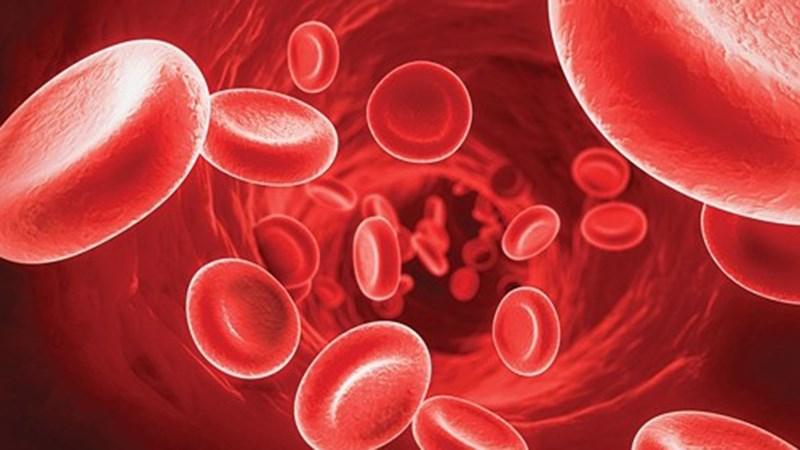 Chống đông máu