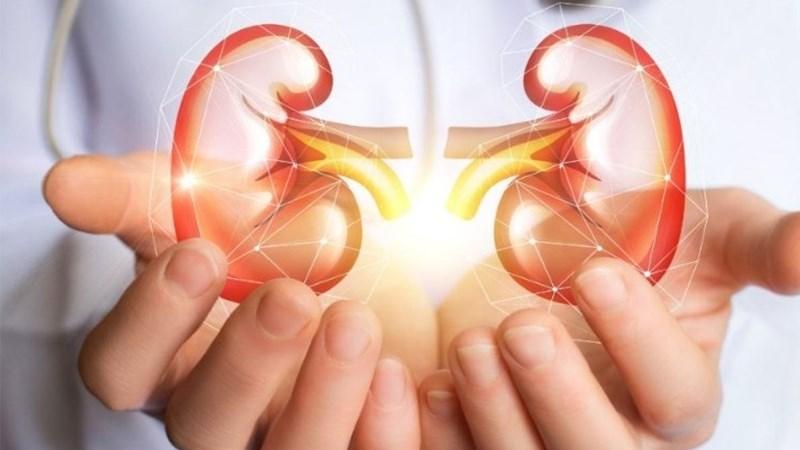 Bảo vệ gan, ngừa sỏi thận