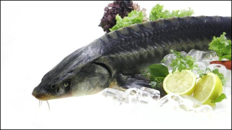 Cách bảo quản cá tầm tươi lâu