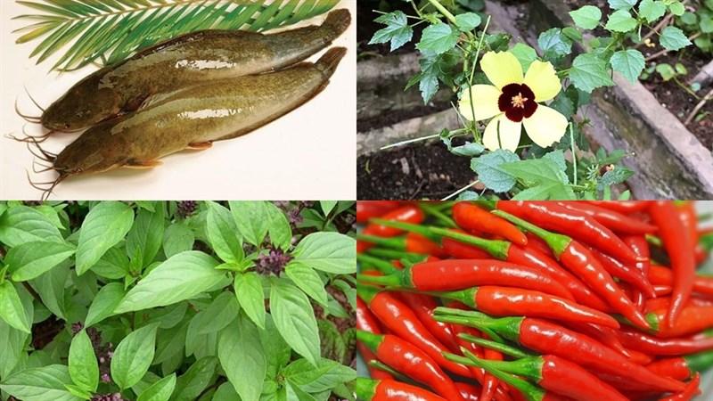 Nguyên liệu món ăn canh lá rau chua cá trê