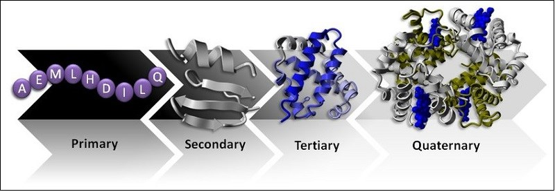 Chức năng chính của protein