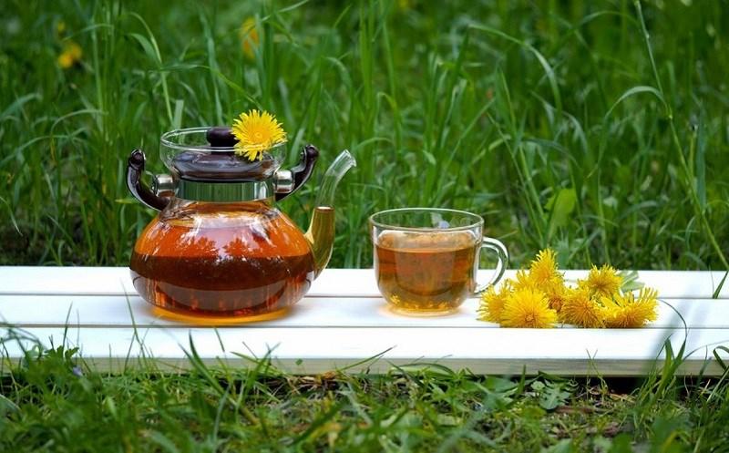 Trà bồ công anh là loại trà gì?