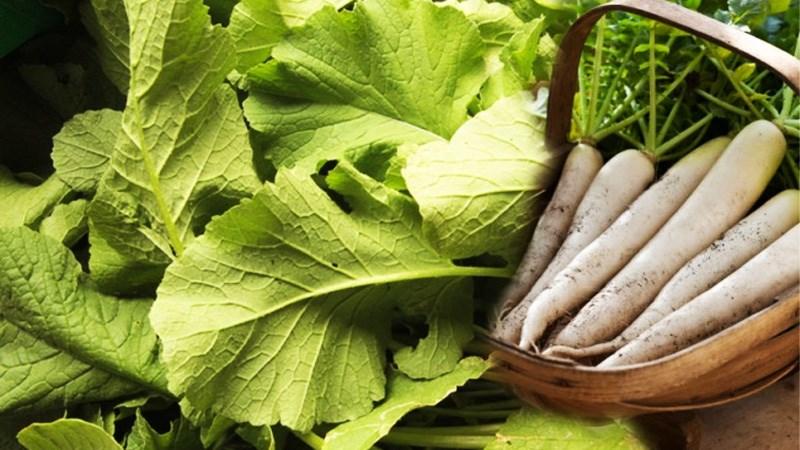 Lá củ cải trắng có ăn được không?